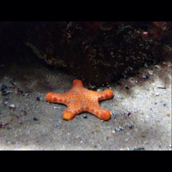 Starfish  Australia Aquarium Melbourne