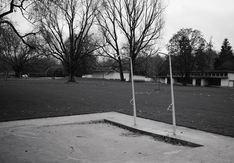 Bare trees in park
