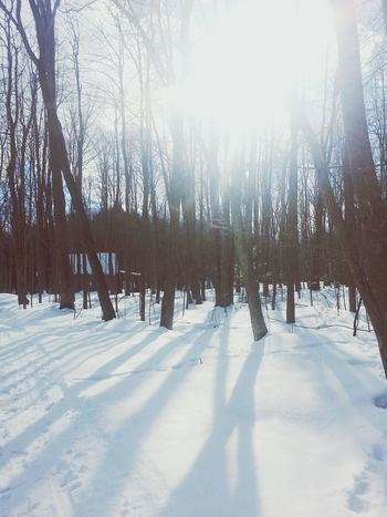forest ♥ Beautiful Nature First Eyeem Photo
