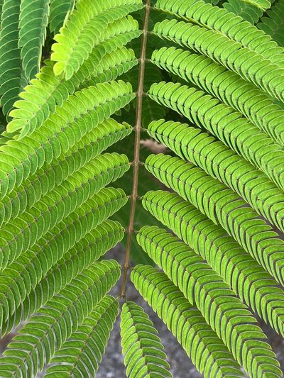 Line of green leafs Leaf Plant Part Green Color Growth Plant No People Nature Close-up Full Frame Beauty In Nature Day Pattern Outdoors Backgrounds Low Angle View Natural Pattern Tree Botany Palm Leaf Fern