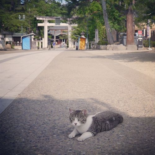 "Cat Introducing Culture Of Japan Which Must Be Left To The Future……  ""未来に残す日本の文化"""
