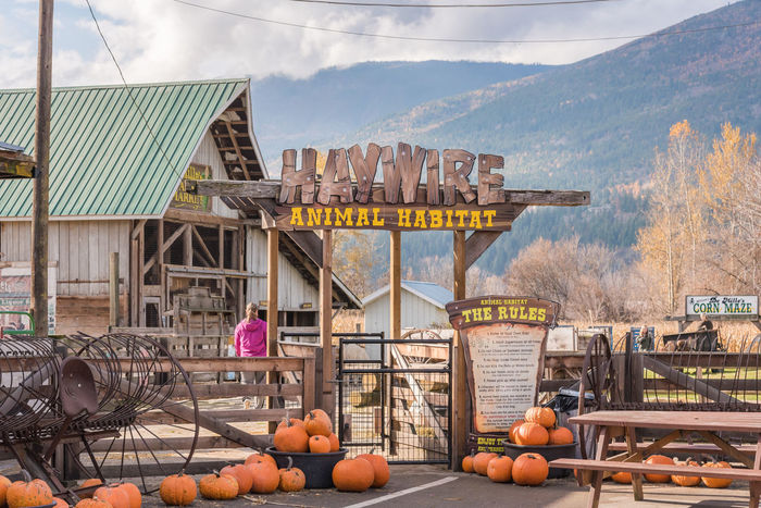 Salmon Arm, British Columbia/Canada - October 23, 2016: the animal habitat and petting zoo at DeMille's Farm Market, a popular location for tourists and locals in the Shuswap region. Autumn Barn British Columbia, Canada DeMille's Farm Market Farm Market Morning October Pumpkins Salmon Arm, BC Scenic Shuswap Travel Agri-tourism Countryside Editorial  Farm Market Mountains Outdoors People Petting Zoo Rural Scene Shop Tourism Tourism Destination