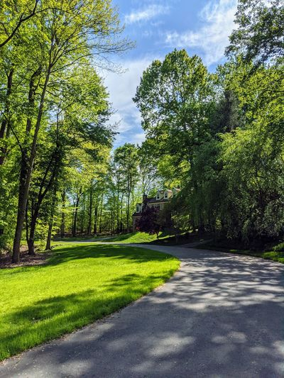 Road amidst trees in park against sky