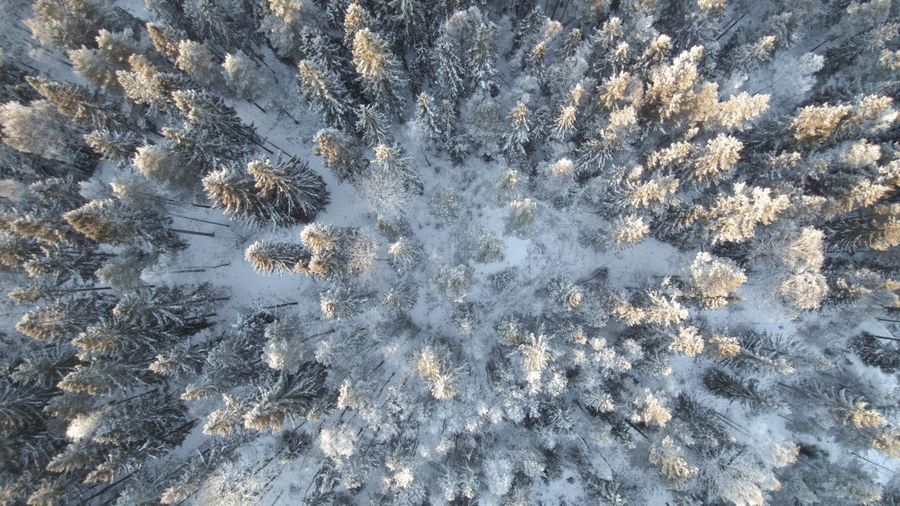 Swedish taiga A Bird's Eye View Beauty In Nature Day Drone  Dronephotography Forest Full Frame Nature Scenics Snow Taiga Tranquility Trees Winter Wintertime Ice Age