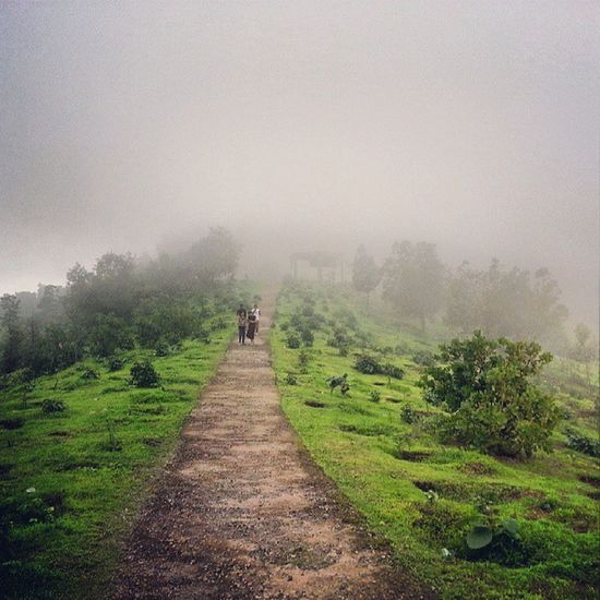 WillSon -HillAt Gujarat-DharampurVery Cool GreennryVery fogy & Very Rainy WeatherHill StationInstalikeinstamoodinstaforwadInstashare :-) :-)