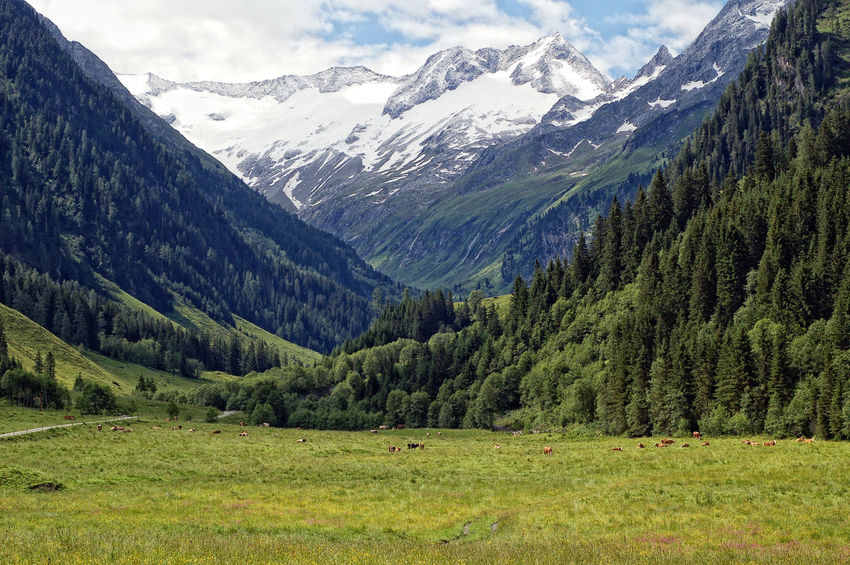 European Alps Mountain Landscape of Zillertal valley Alps in summer. Side Valley Schoenachtal. Alpen Alpenpanorama Day Glacier High Tauern Hiking Hohe Tauern Landscape Mountain Mountain Range Nature Outdoors Schönachtal Snow Snow ❄ Summerinthemountains Tirol  Zillertal Zillertal Alps
