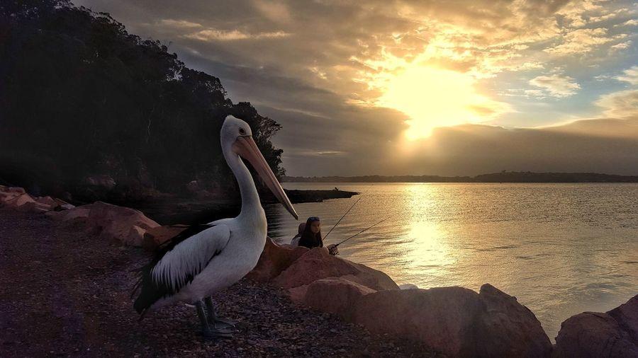 Sunset Animal Wildlife Animals In The Wild Water Animal Bird Sun