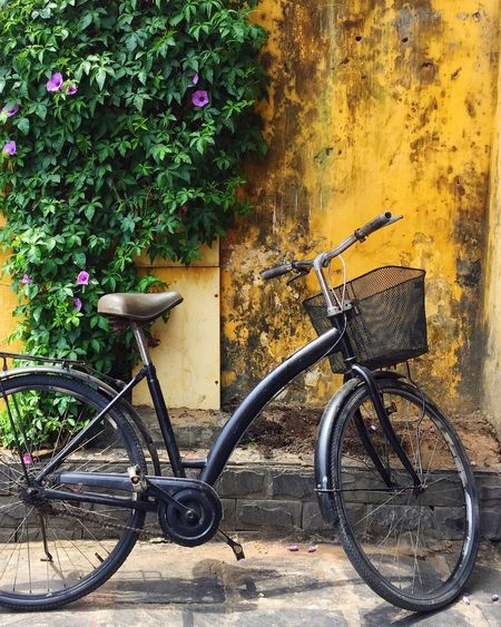 Bicycle parked against plants