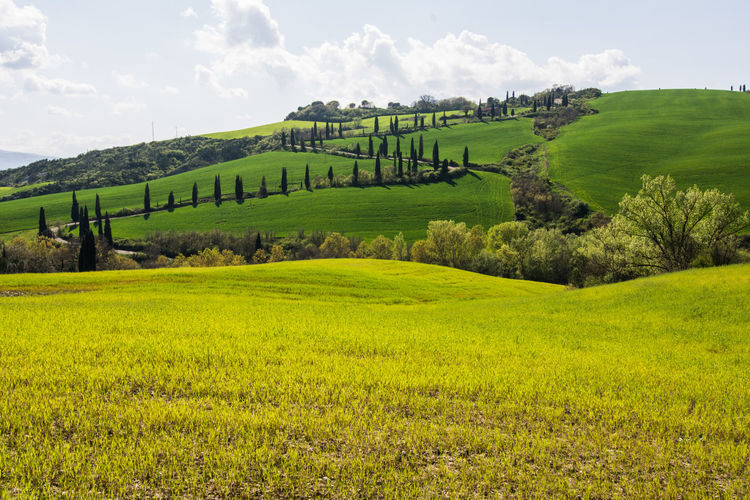 Agriculture Beauty In Nature Day Farm Field Grass Green Color Growth Landscape Mountain Nature No People Outdoors Pienza Italy Rice Paddy Rural Scene Scenics Sky Terraced Field Tranquil Scene Tranquility Travel Destinations Tree