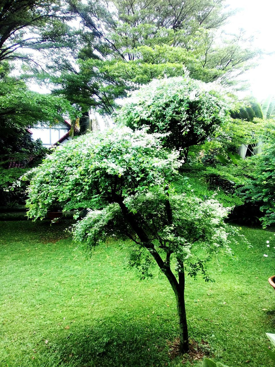 nature, growth, tree, tranquility, grass, beauty in nature, no people, plant, day, outdoors