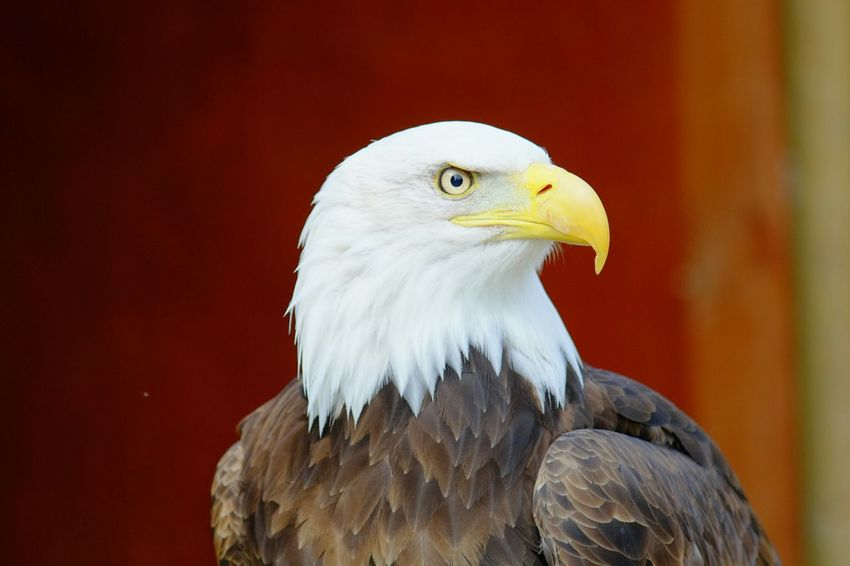 Eagle Check This Out Eye4photography  Love Outdoors Nature Enjoying Life Taking Photos Check This Out Wildlife