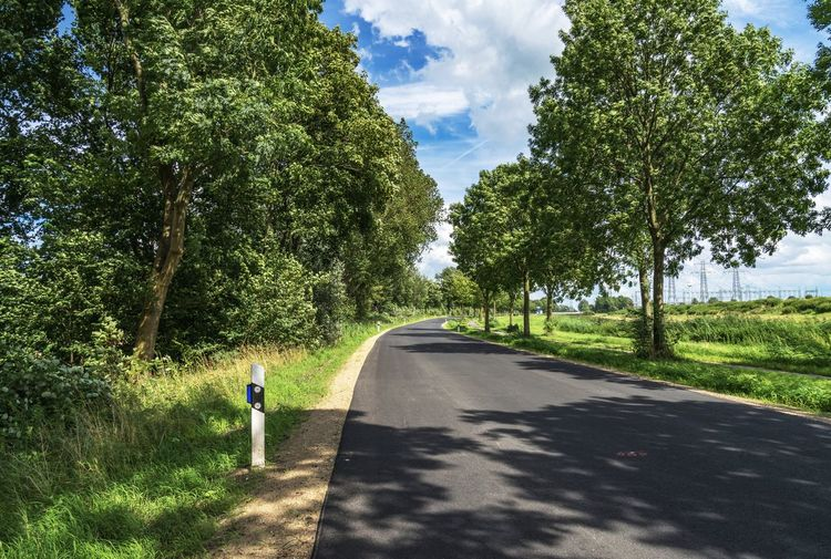 Rear view of road amidst trees against sky