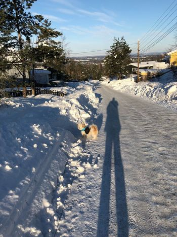 Snow Winter Cold Temperature Shadow Sunlight Weather Outdoors Colour Your Horizn