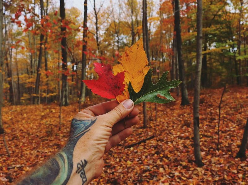 Autumn Change Leaf Real People Tree One Person Human Hand Growth Human Body Part Nature Holding Close-up Adults Only Outdoors Day Maple Leaf Men Adult Only Women Maple Forest EyeEm Nature Lover Nature Landscape Self Portrait