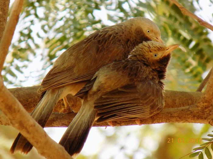 Caring birds On Tree Branch Beauty In Nature wildgraphotography In Bengaluru,india