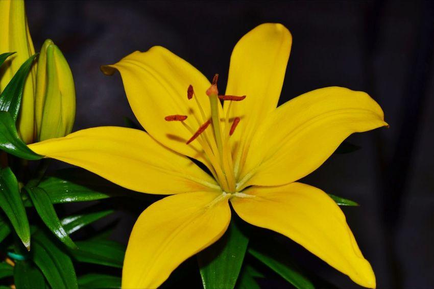 Flower MyBackGarden Nature On Your Doorstep