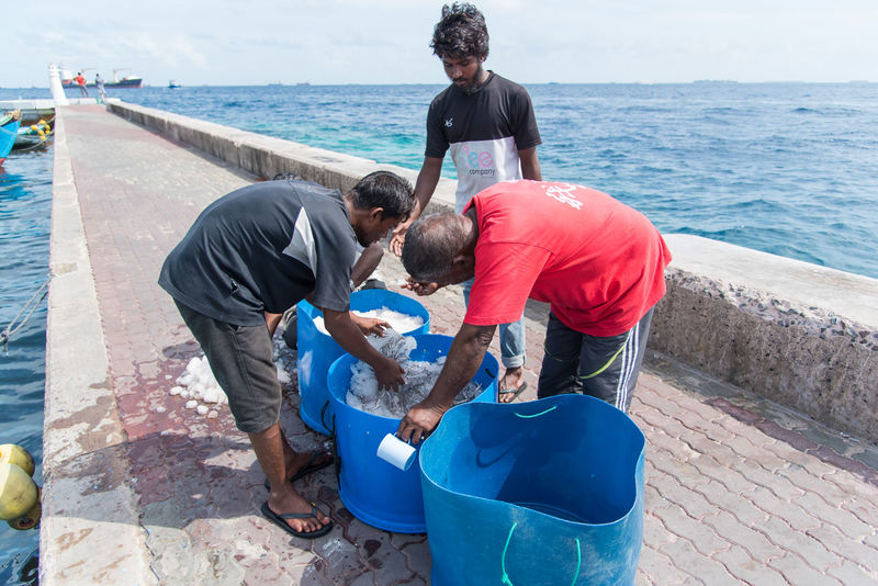 Big Tuna Boat Fish Fishing Boat Fishing Man Fresh Fish Fresh Fish Market Fresh Tuna Ice Maldives Maldives Island Male Maldives Raw Food Seafood Tuna Fish