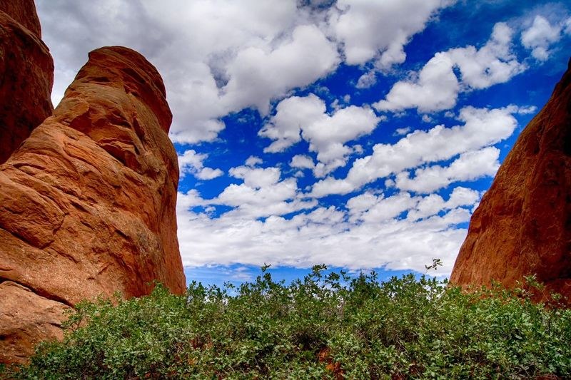 Plants by rock formations at arches national park against sky