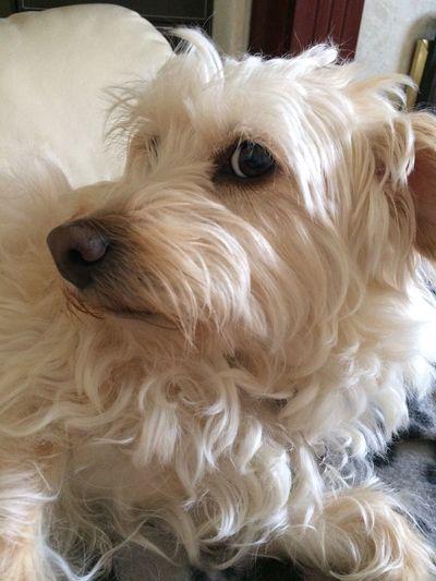 Dog Canine Domestic Pets Domestic Animals One Animal Mammal