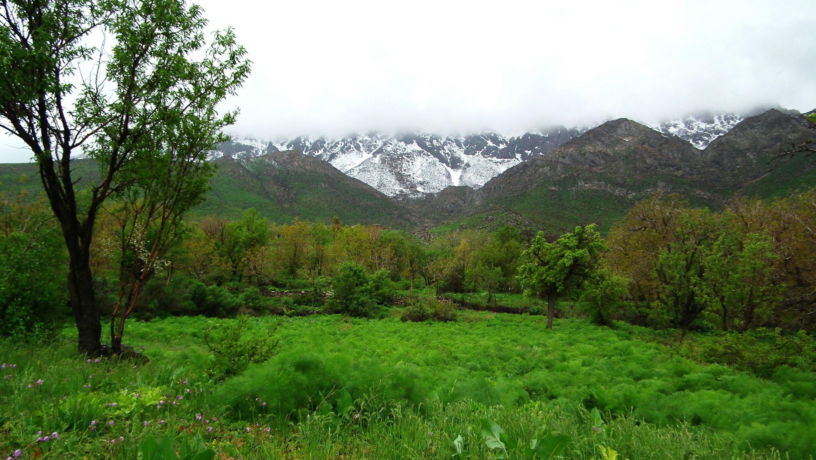 mountain, tree, tranquil scene, tranquility, scenics, beauty in nature, landscape, mountain range, grass, green color, nature, growth, non-urban scene, sky, lush foliage, idyllic, remote, grassy, day, green