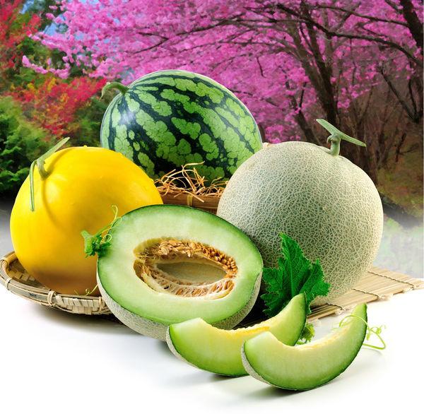 健康食物 台灣水果 哈蜜瓜 室內 新鮮 果實 水果 油畫 特寫 瓜類 美味 背景图 西瓜 農作物 食物 香瓜