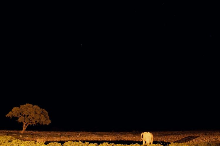 Namibia Animal Themes Animals In The Wild Nightphotography Safari Animals Elephant Tree Long Exposure Waterhole Mammal Africa National Park Sky Landscape Farmland Agricultural Field Farm Plantation Crop  Barn Plough Cultivated Land Hay Bale
