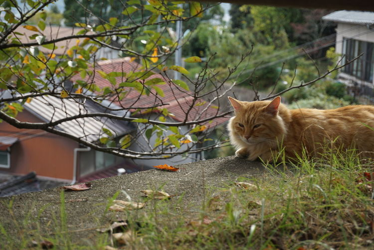 Cat On Lawn Of House