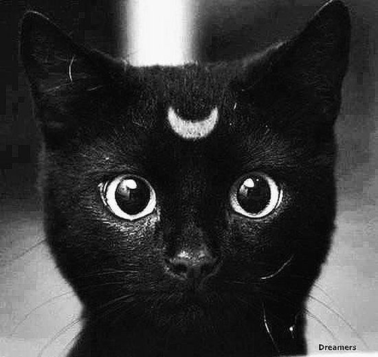 Cats Moon Headache Nowplaying