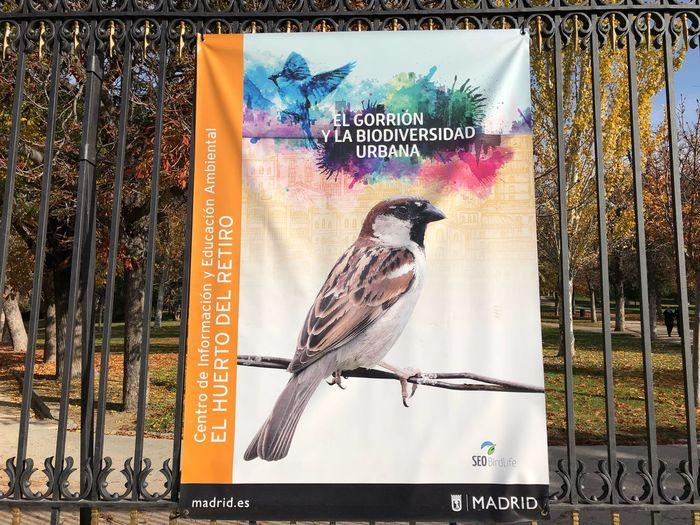 Bird Animal Wildlife Day Perching One Animal Animals In The Wild Animal Themes Gorrion