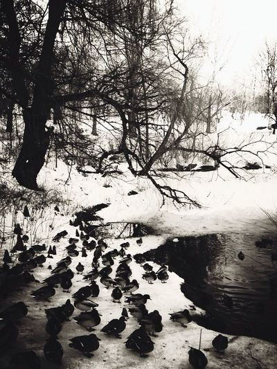 Duck Club ~ NYC 2014 EyeEm Birds Water_collection Trees Black And White