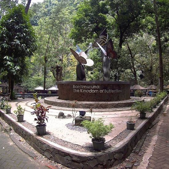 Bantimurung Surga bagi kupu-kupu. Ini sala satu tempat wisata yang wajib di kunjungi saat berada di Makassar , Terletak di wilayah Marros , dengan menempuh satu setengah jam Perjalanan dari pusat kota. Traveling INDONESIA Couchsurfing Trip Adventure Paradaise Roadtrip Jalan2man Jalanjalan Visitindonesia Explore