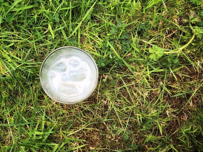 Alcohol Alcoholic Drink Ouzo And Ice Ouzo Ice Drink Glass Grass Plant Land Green Color Nature High Angle View Growth Field No People Directly Above Day Outdoors Close-up Glass - Material Sunlight