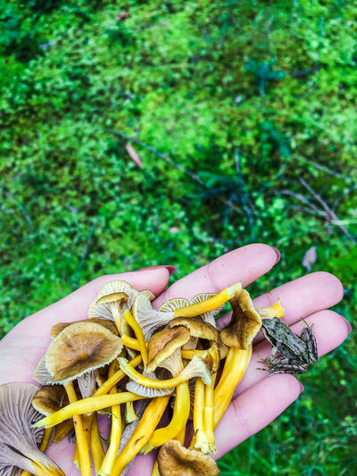 Searching mushrooms Frog Green Color Forest Hand Human Hand Muschroom Nature Outdoors The Great Outdoors - 2018 EyeEm Awards The Traveler - 2018 EyeEm Awards Be Brave