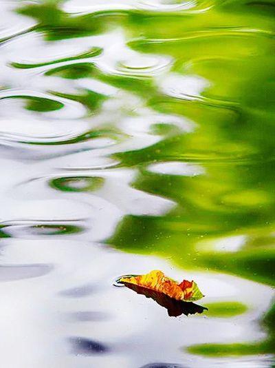 Color Palette Leaf Green Water Layers Getting Inspired Eye4photography  EyeEm Best Shots EyeEm Gallery