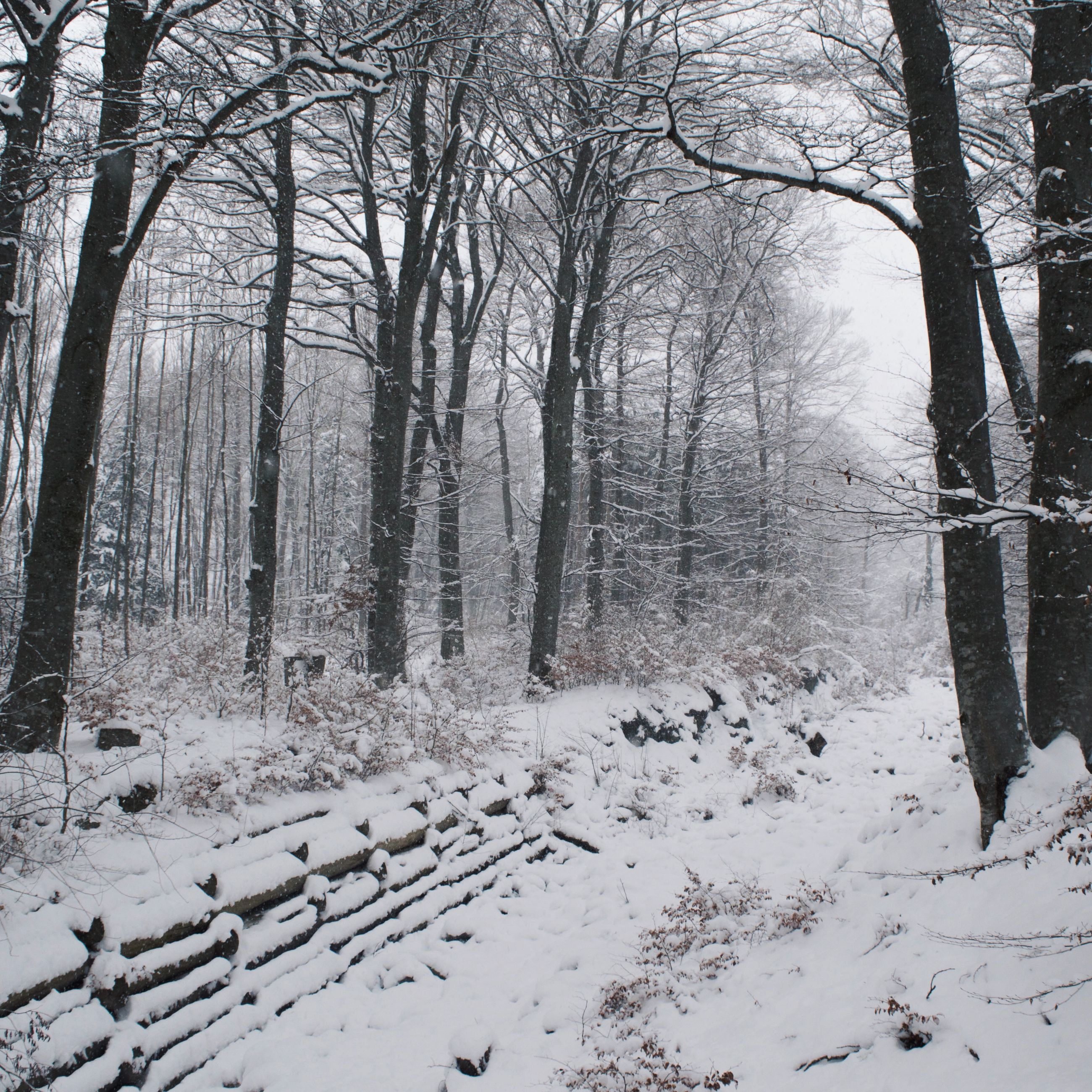 snow, winter, cold temperature, tree, season, tranquility, bare tree, tranquil scene, forest, weather, nature, covering, beauty in nature, woodland, scenics, landscape, tree trunk, frozen, branch, non-urban scene