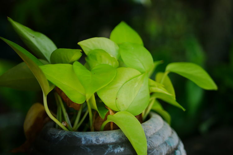 Close-up of potted plant