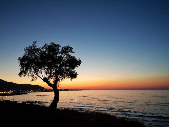 Silhouette tree on beach against clear sky at sunset