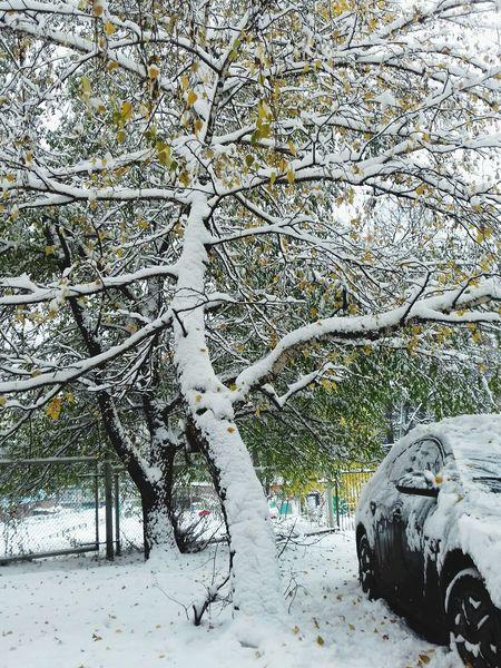 Tree Snow Day Winter Outdoors No People снег на ветке снег