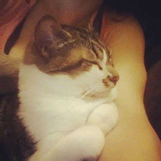 Cuteness. Tucked paws, sleeping kitty. Izzykitty Purrpurrpurr Kittensnuggles