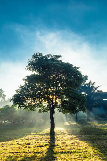 Low angle view of a tree At sunrise In The Morning Light Light Light Through The Trees Sun Rise Beauty In Nature Cloud - Sky Day Environment Field Grass Growth Isolated Land Landscape Nature Non-urban Scene Outdoors Plant Scenics - Nature Sky Sunlight Tranquil Scene Tranquility Tree