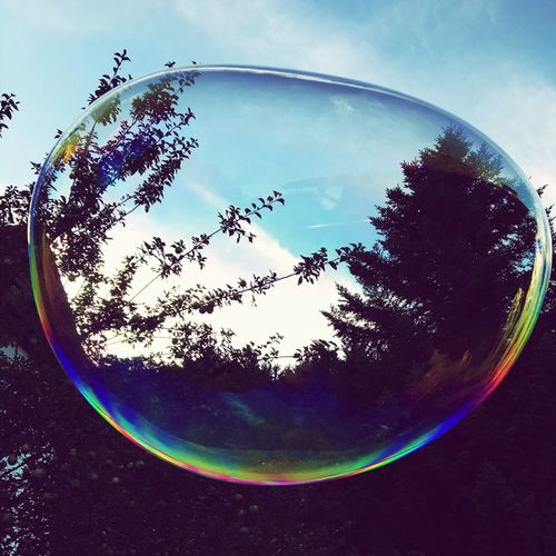 No People Sky Bubble Tree Circle Reflection Close-up Beauty In Nature Day Outdoors Nature Fragility Water Bubble Wand Fish-eye Lens colours