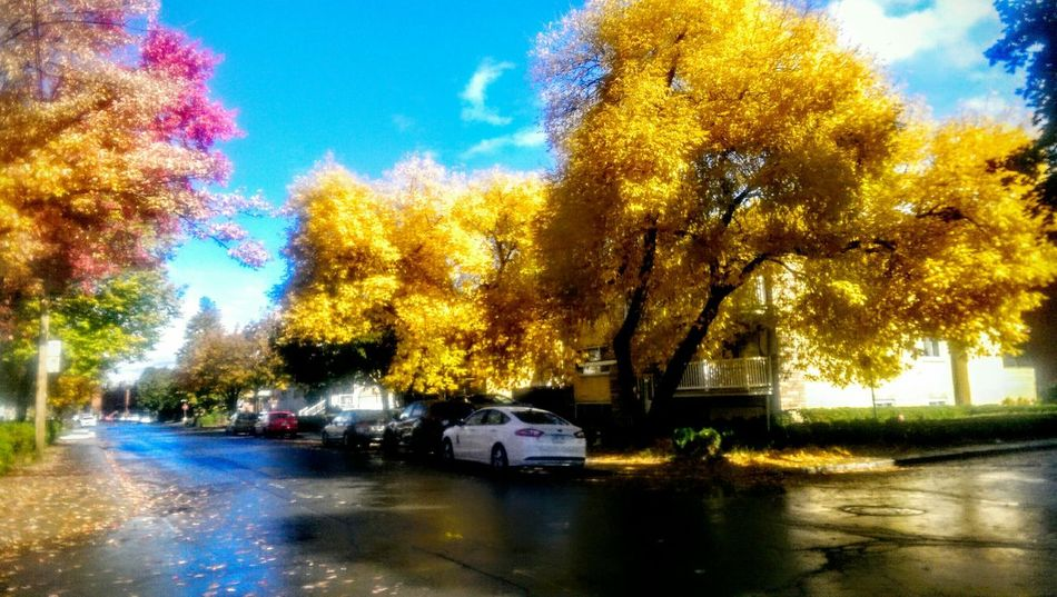 Fall Colors EyeEm Nature Lover Colors Of Autumn Neighborhood Montreal, Canada Changing Seasons HTC_photography Automne EyeEm Best Shots - Nature Eyem Best Edits Color Of Life Quartier Rue Paint The Town Yellow