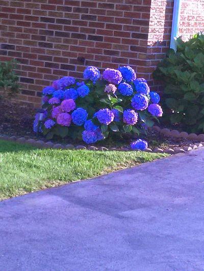 Coloridos de las flores en behtlehem Pensylvania