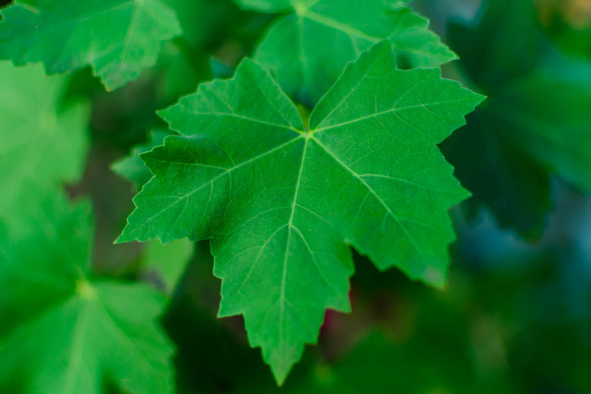 Beauty In Nature Close-up Day Green Color Growth Leaf Nature Outdoors Plant EyeEmNewHere