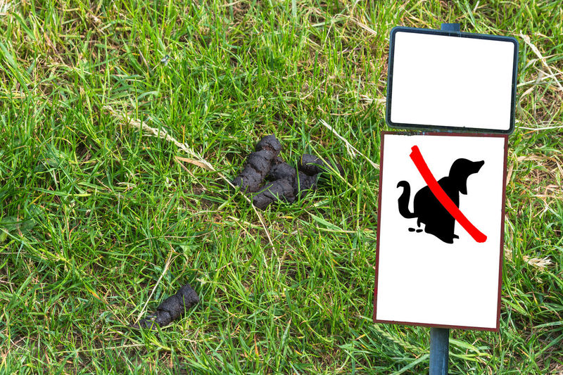"Dog feces on a meadow next to a sign with Symbol ""No Dog Popping"" Animal Themes Animals In The Wild Bird Day Dog Excrement Grass Green Color Kot Brytyjski Nature No People Outdoors"