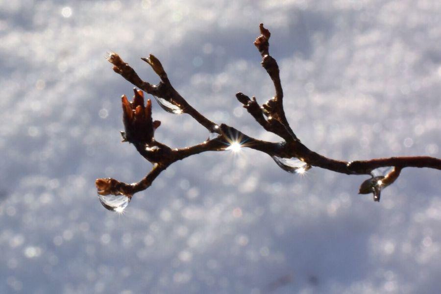 そろそろ雪の写真は終わりかも😅 Nature Beauty In Nature Close-up Macro Nature Macro Beauty Macroclique Macro_collection Macro Drops The Purist (no Edit, No Filter) Drop Lightandshadow Snow
