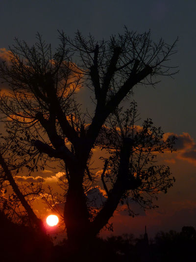 Silhouette tree on field against orange sky