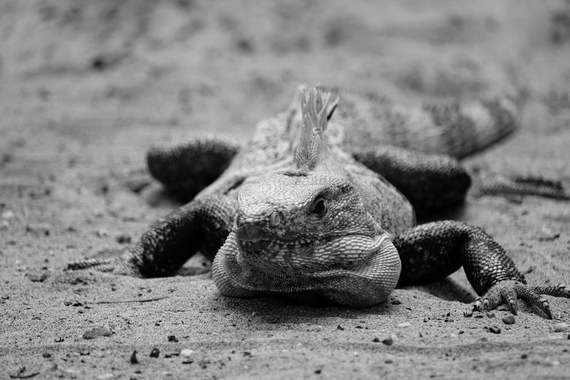 Black And White Friday Animals In The Wild Animal Themes Sand One Animal Reptile Animal Wildlife No People Nature Close-up Day Beach Focus On Foreground Outdoors
