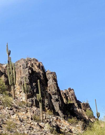 Saguaros at squaw peak under a clear blue desert sky