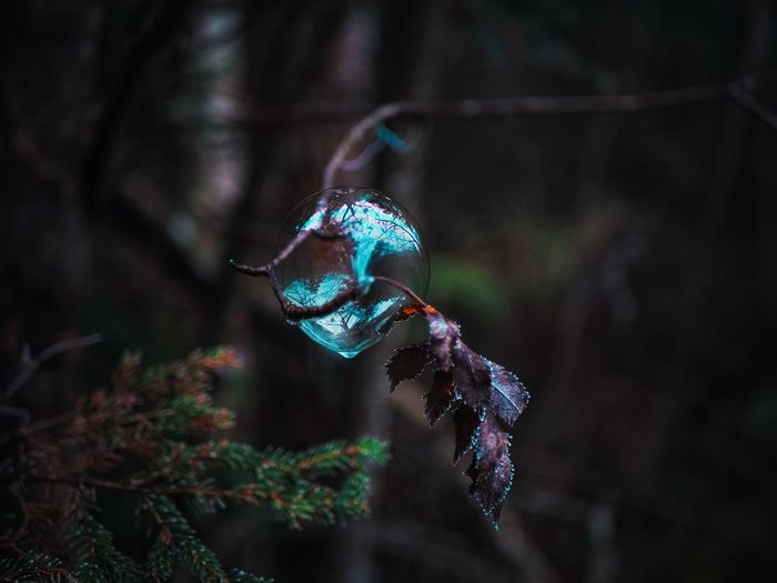 Glass sphere in the forest - close up
